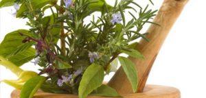 علاج الضغط المنخفض بالأعشاب