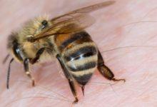 علاج قرص النحل