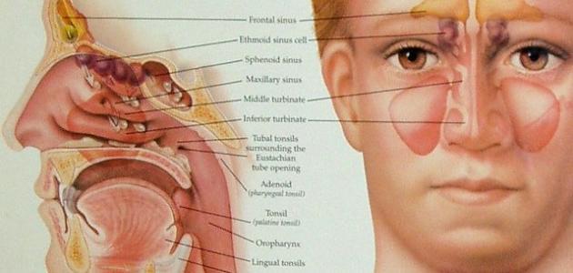 علاج حساسية الجيوب الانفية