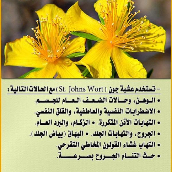 نبتة سانت جون
