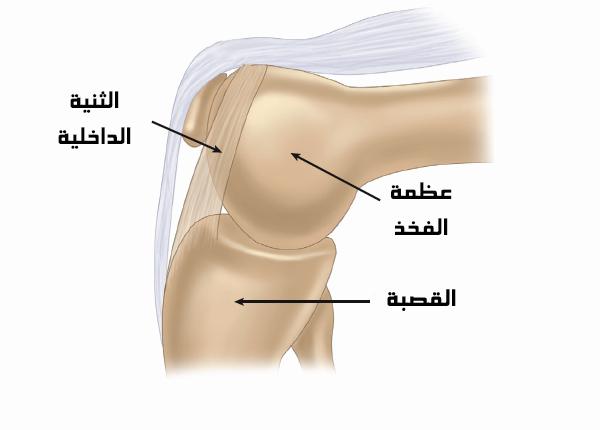 تكوين الركبة من الداخل