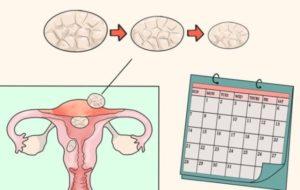 فترة الاباضة عند المرأة