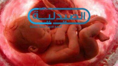 تطور الجنين في المرحلة الأخيرة للحمل