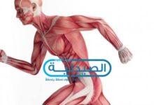 علاج التهاب وتشنجات العضلات