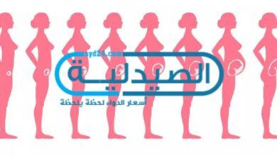 مراحل تطور الجنين