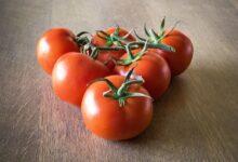 مجموعة من حبات طماطم