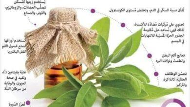 فوائد عشبة الميرمية