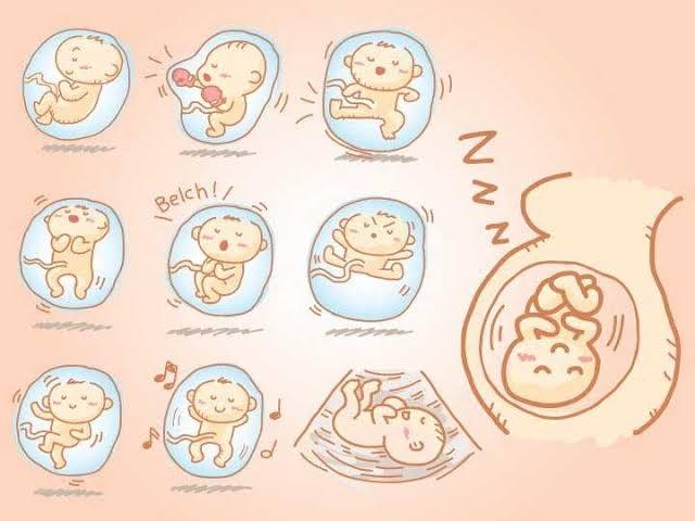 أنواع حركة الجنين