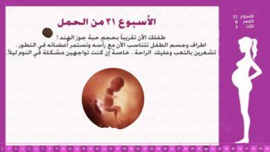 الأسبوع الحادي والثلاثين من الحمل